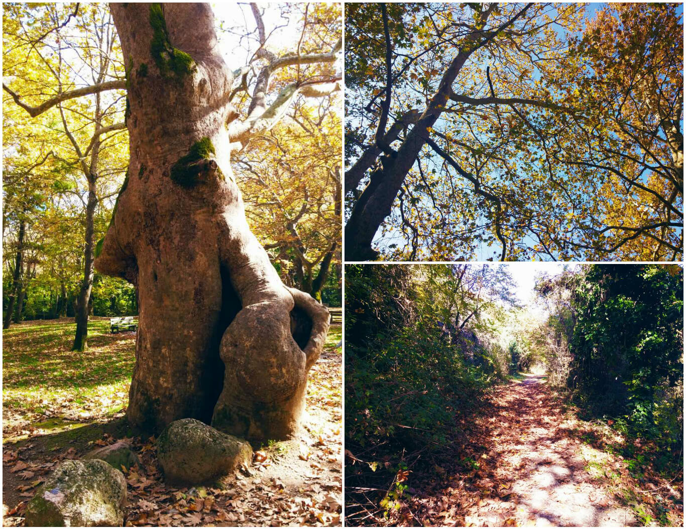 naousa-agios-nikolaos-collage-1